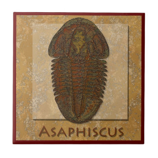 Asaphiscus Fossil Trilobite Small Square Tile