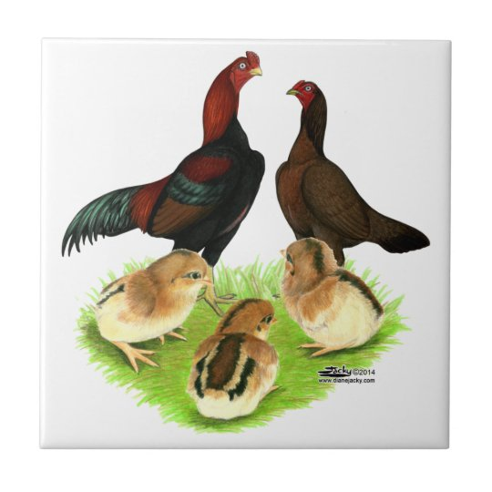 Aseel Black Red Chicken Family Tile