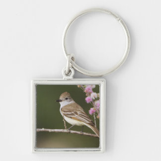 Ash-throated Flycatcher, Myiarchus Silver-Colored Square Key Ring