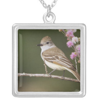 Ash-throated Flycatcher, Myiarchus Silver Plated Necklace