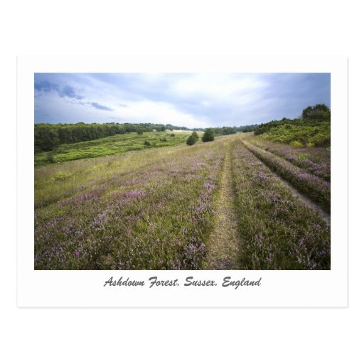 Ashdown Forest Post Cards