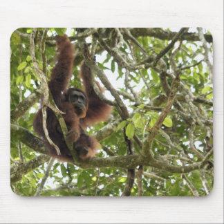 Asia, Borneo, Malaysia, Sarawak, Orangutan Mouse Pad