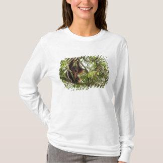Asia, Borneo, Malaysia, Sarawak, Orangutan T-Shirt