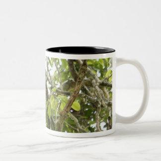 Asia, Borneo, Malaysia, Sarawak, Orangutan Two-Tone Coffee Mug