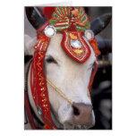 Asia, Burma (Myanmar) Shinbyu ceremony. Bull