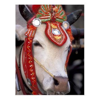 Asia, Burma (Myanmar) Shinbyu ceremony. Bull Postcard