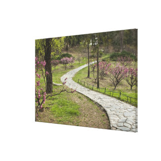 Asia, China, Beijing. Spring blossoms along Gallery Wrap Canvas
