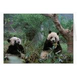Asia, China, Chengdu. Giant Panda Sanctuary - 2 Greeting Card