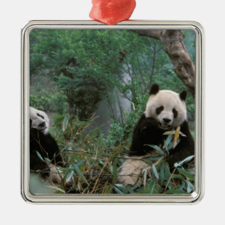Asia, China, Chengdu. Giant Panda Sanctuary - 2 Silver-Colored Square Decoration