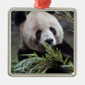 Asia, China Chongqing. Giant Panda at the Christmas Ornament