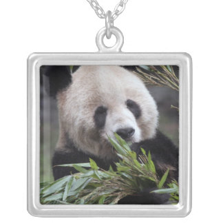 Asia, China Chongqing. Giant Panda at the Silver Plated Necklace