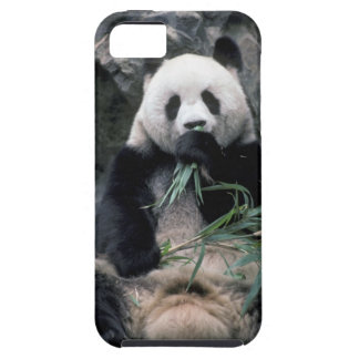 Asia, China, Chundu, Giant panda iPhone 5 Cover