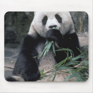 Asia, China, Chundu, Giant panda Mouse Mat