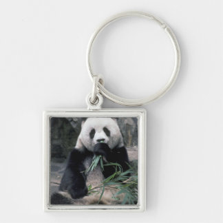 Asia, China, Chundu, Giant panda Silver-Colored Square Key Ring