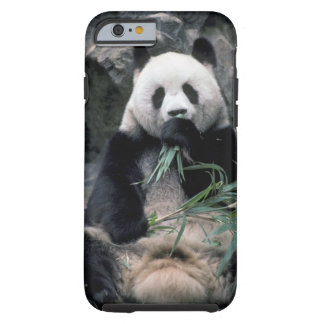Asia, China, Chundu, Giant panda Tough iPhone 6 Case