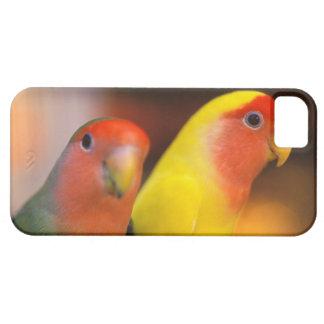 Asia, China, Hong Kong. Yuen Po Street bird iPhone 5 Covers