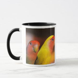 Asia, China, Hong Kong. Yuen Po Street bird Mug