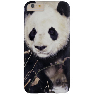 Asia, China, Sichuan Province. Giant Panda in 2 Barely There iPhone 6 Plus Case