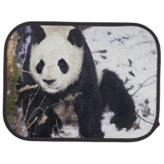 Asia, China, Sichuan Province. Giant Panda in 2 Car Mat