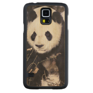 Asia, China, Sichuan Province. Giant Panda in 2 Carved Maple Galaxy S5 Case