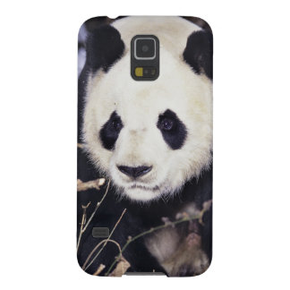 Asia, China, Sichuan Province. Giant Panda in 2 Case For Galaxy S5