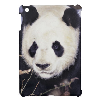 Asia, China, Sichuan Province. Giant Panda in 2 iPad Mini Covers