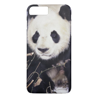 Asia, China, Sichuan Province. Giant Panda in 2 iPhone 8 Plus/7 Plus Case