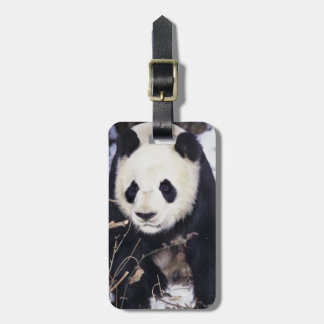 Asia, China, Sichuan Province. Giant Panda in 2 Luggage Tag