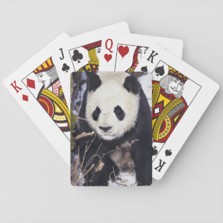 Asia, China, Sichuan Province. Giant Panda in 2 Playing Cards