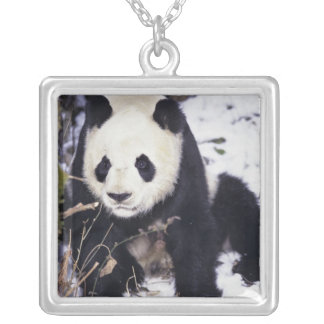 Asia, China, Sichuan Province. Giant Panda in 2 Silver Plated Necklace
