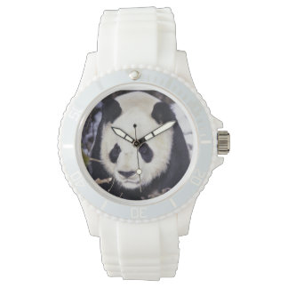 Asia, China, Sichuan Province. Giant Panda in 2 Wrist Watch
