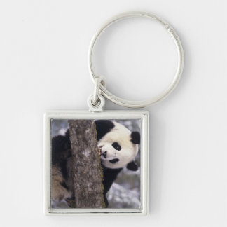 Asia, China, Sichuan Province. Giant Panda in Silver-Colored Square Key Ring