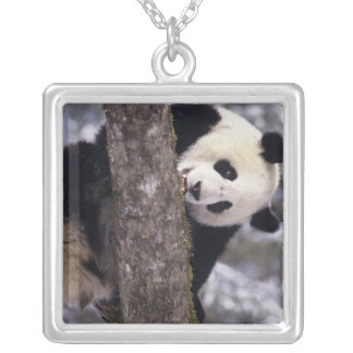 Asia, China, Sichuan Province. Giant Panda in Silver Plated Necklace