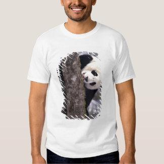 Asia, China, Sichuan Province. Giant Panda in Tee Shirt