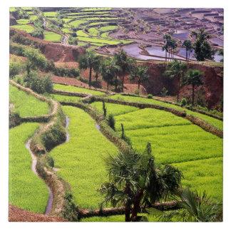 Asia, China, Yunnan, Honghe.  Rice terraces near 2 Tile