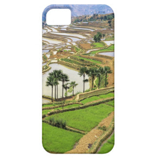 Asia, China, Yunnan, Honghe.  Rice terraces near iPhone 5 Cases