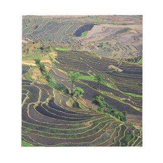 Asia, China, Yunnan, Honghe. Rice Terraces near Notepad