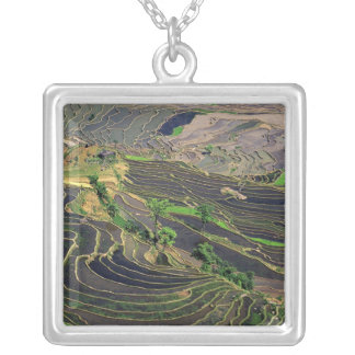 Asia, China, Yunnan, Honghe. Rice Terraces near Silver Plated Necklace