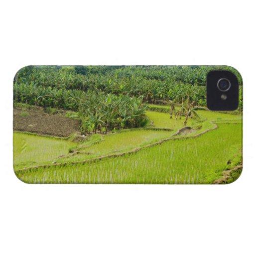 Asia, China, Yunnan Province, Honghe. Banana Blackberry Bold Case