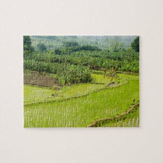Asia, China, Yunnan Province, Honghe. Banana Jigsaw Puzzle
