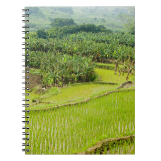 Asia, China, Yunnan Province, Honghe. Banana Notebook