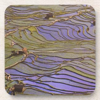 Asia, China, Yunnan Province, Yuanyang. Flooded Drink Coaster