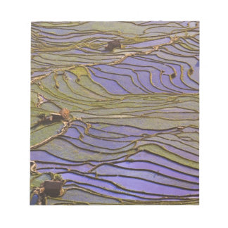 Asia, China, Yunnan Province, Yuanyang. Flooded Notepad