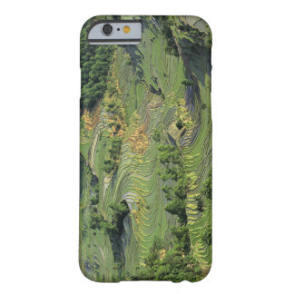 Asia, China, Yunnan, Yuanyang. Pattern of green 2 Barely There iPhone 6 Case