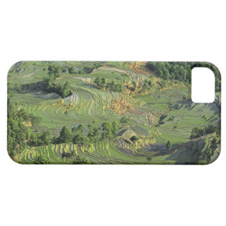 Asia, China, Yunnan, Yuanyang. Pattern of green 2 iPhone 5 Case