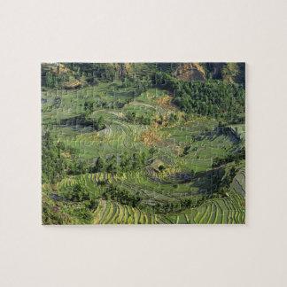 Asia, China, Yunnan, Yuanyang. Pattern of green 2 Jigsaw Puzzle