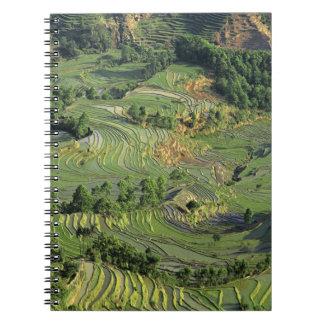 Asia, China, Yunnan, Yuanyang. Pattern of green 2 Notebook