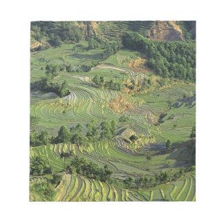 Asia, China, Yunnan, Yuanyang. Pattern of green 2 Notepad