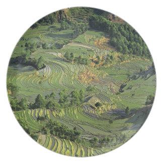 Asia, China, Yunnan, Yuanyang. Pattern of green 2 Plate