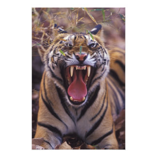 Asia, India, Bandhavagarth National Park, A Photo Print